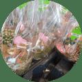 """<a href=""""https://spar-elewijt.be/producten/groenten-fruit/"""">Groenten & Fruit</a>"""